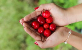 woman holding cherries in both hands because of someones cherry tree legacy