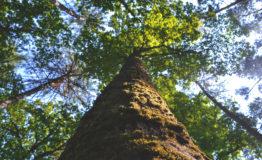 a healthy tree